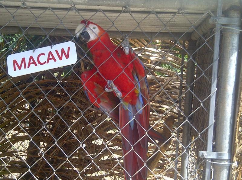 Macaw Agriculture Department Open Day in Anguilla