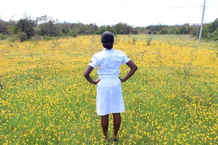 A field of crocus flowers